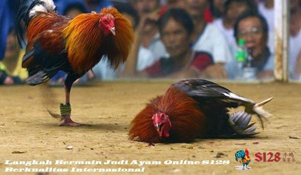Langkah Bermain Judi Ayam Online S128 Berkualitas Internasional